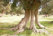Sarparea, località Sant'Isidoro (Le)